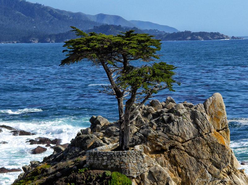 One Tree Alone<br /> California Coast Line