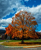 My Daughters' Favorite Tree<br /> Potomac State College<br /> Keyser, West Virginia