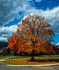 My Daughters' Favorite Tree<br /> Potomac State College<br /> Keyser, West Virginia