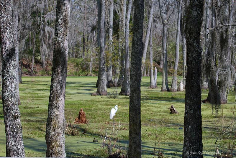 Alone <br /> Magnolia Plantation and Gardens  <br /> Charleston, South Carolina
