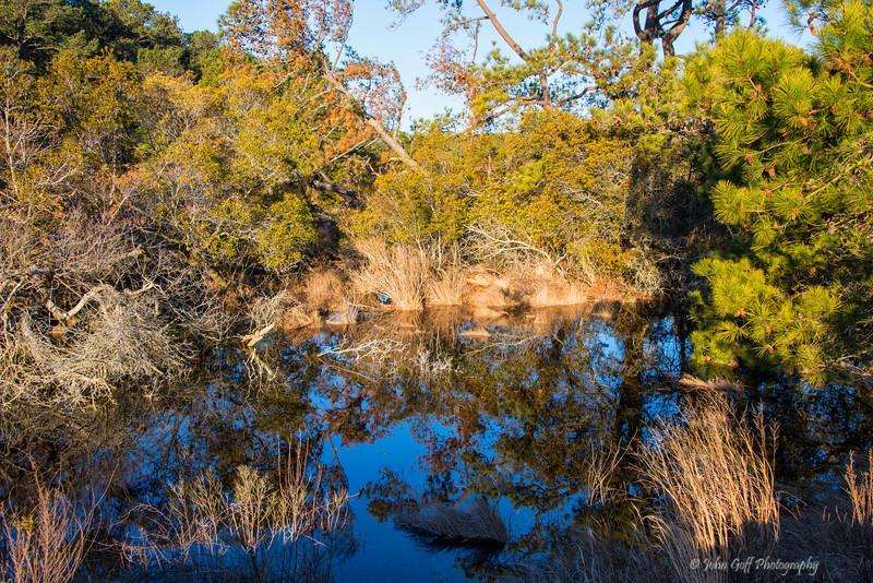 Reflection<br /> Chincoteague National Wildlife Refuge<br /> Chincoteague, Virginia