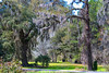 Hanging<br /> Magnolia Plantation and Gardens<br /> Charleston, South Carolina