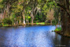 Majestic<br /> Magnolia Plantation<br /> Charleston, South Carolina