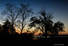 Evening<br /> Sycamore Llanding Planation<br /> St. Michaels, Maryland