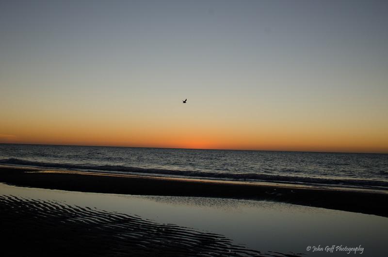 Early Bird<br /> Myrtle Beach, South Carolina