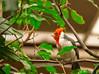 Bird<br /> Smithsonian Zoo Photo Walk