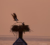Building A Nest<br /> North Beach, Maryland