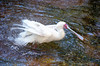 Shake Your Tail Feathers<br /> Maryland Zoo<br /> Baltimore Maryland