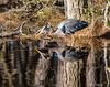 Reverse Image <br /> Chincoteague National Wildlife Refuge<br /> Chincoteague, Virginia