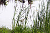 Can You See Me<br /> Brookgreen Gardens<br /> Myrtle Beach, South Carolina