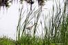 Can You See Me<br /> Brookgreen Gardens<br /> Myrtle Beach, South Carolina