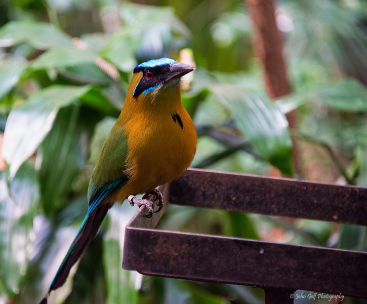 Blue Bird<br /> Smithsonian Zoo Photo Walk