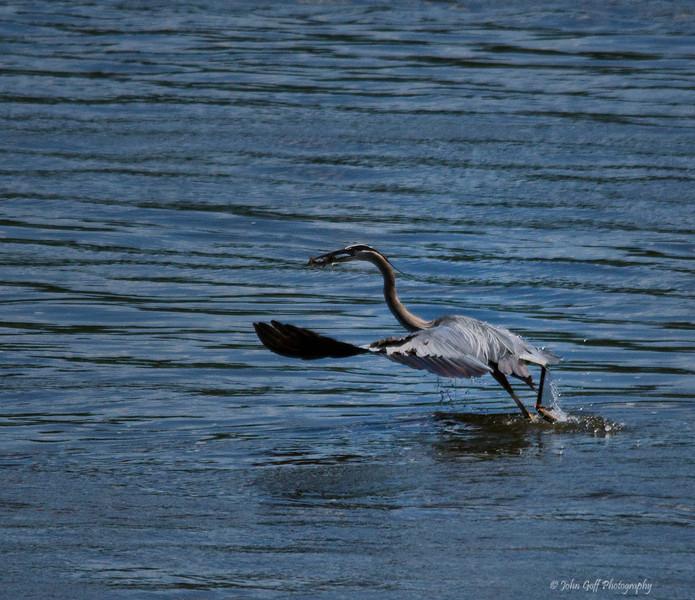 Walking On Water<br /> Conowingo Dam, Maryland