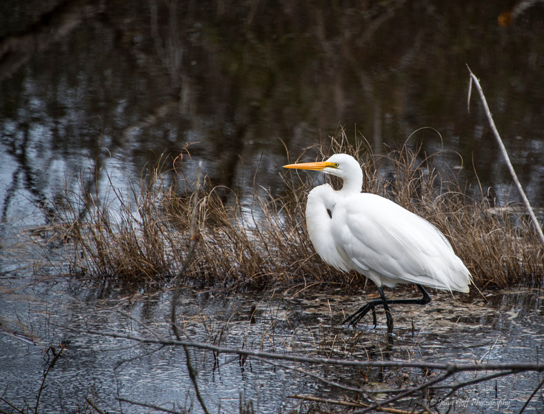 Walk About<br /> Chincoteague National Wildlife Refuge<br /> Chincoteague, Virginia