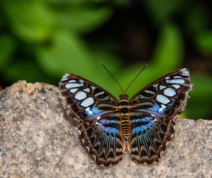 On A Rock<br /> Brookside Gardens -  Butterflies - Wings of Fancy<br /> 1800 Glenallan Avenue<br /> Wheaton, MD