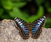 On A Rock<br /> Brookside Gardens -  Butterflies - Wings of Fancy<br /> 1800 Glenallan Avenue<br /> Wheaton, MD