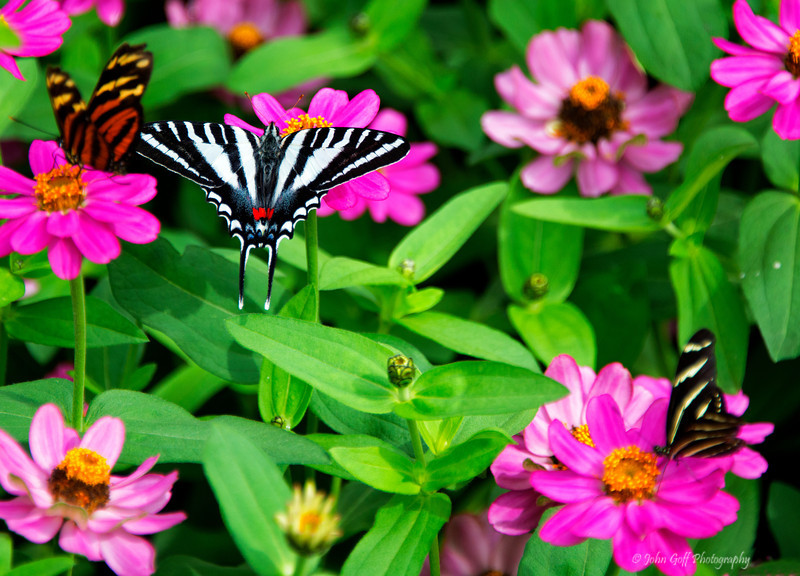 Stripped<br /> Brookside Gardens -  Butterflies - Wings of Fancy<br /> 1800 Glenallan Avenue<br /> Wheaton, MD