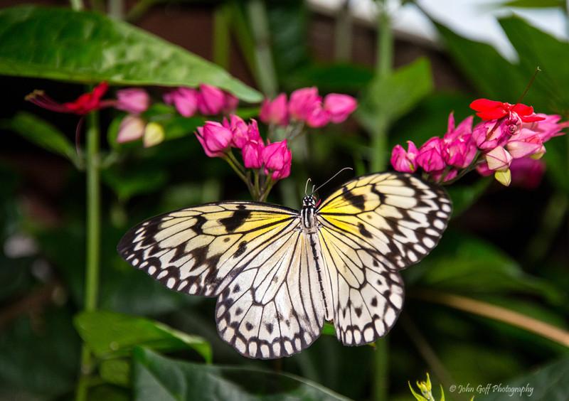 Yellow<br /> Brookside Gardens -  Butterflies - Wings of Fancy<br /> 1800 Glenallan Avenue<br /> Wheaton, MD