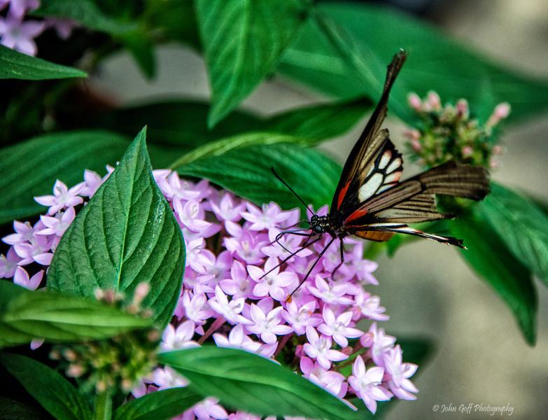 Sweet<br /> Brookside Gardens -  Butterflies - Wings of Fancy<br /> 1800 Glenallan Avenue<br /> Wheaton, MD