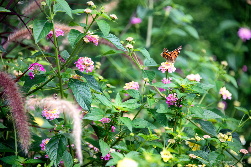 Butterfly<br /> Monticello<br /> Plantation of Thomas Jefferson<br /> Charlottesville, Virginia