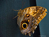 Looking At You<br /> Brookside Gardens -  Butterflies - Wings of Fancy<br /> 1800 Glenallan Avenue<br /> Wheaton, MD