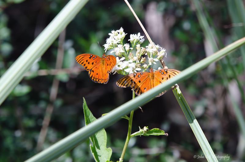 Two Butterflies<br /> Brookgreen Gardens<br /> Myrtle Beach, South Carolina