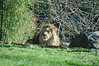 The King<br /> Maryland Zoo<br /> Baltimore Maryland