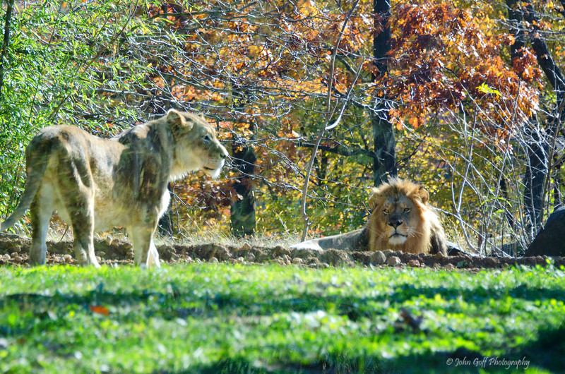The King And Queen<br /> Maryland Zoo<br /> Baltimore Maryland