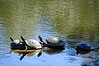 Turtle In A Row<br /> Brookgreen Gardens<br /> Myrtle Beach, South Carolina