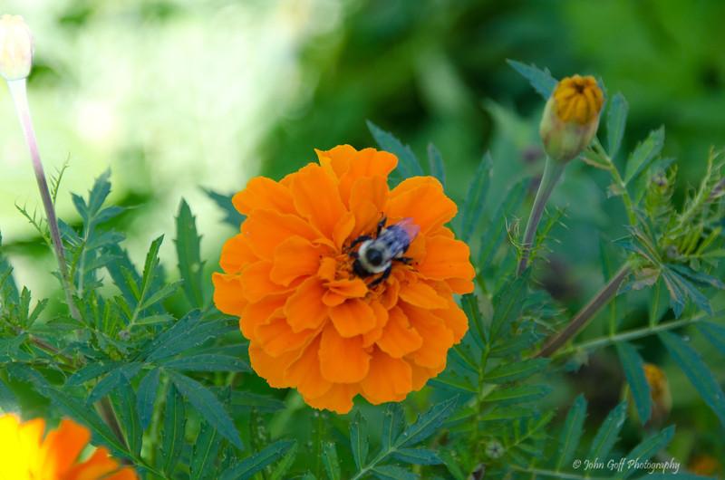 Bee<br /> Brookgreen Gardens<br /> Myrtle Beach, South Carolina