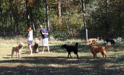 Dog Park Fall 2010
