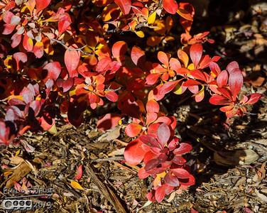 Fall Foliage 2013 Part I