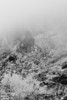 Late afternoon drive down US-24, through Ute Pass, on my way home.  I descended through a cloud which had settled on the mountain, and the moisture combined with the cold laid a mantle of frost onto the landscape.  I stopped to enjoy it.<br /> <br /> One of the above ones in B&W