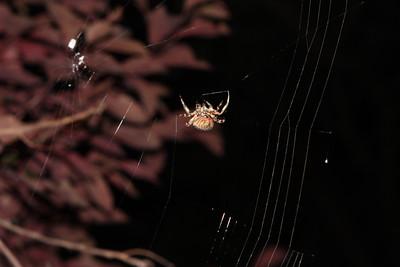 2010.08.18 Spider