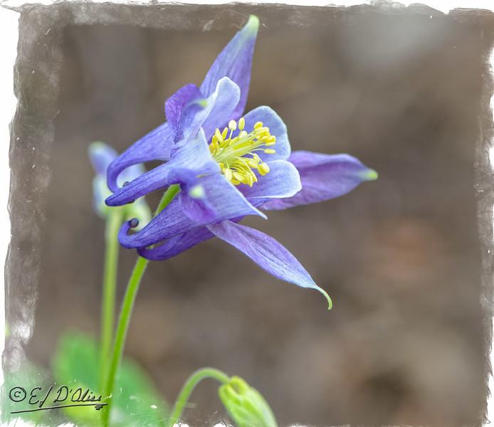 June 13, 2015 flowers
