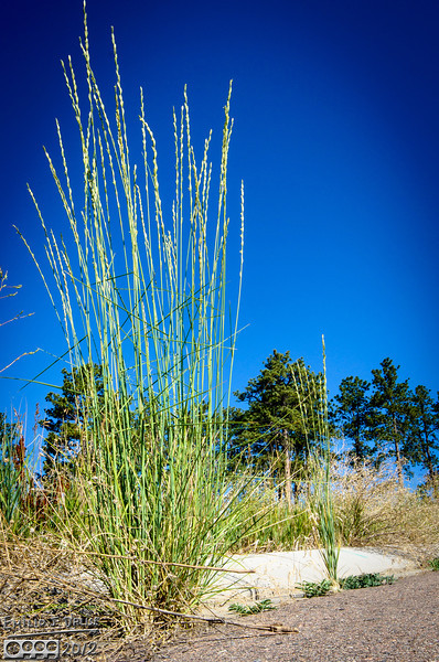 The prevalent plants are grasses.  All sorts of grasses.