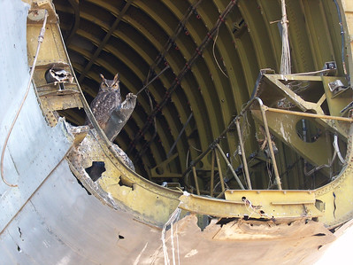 Owl finds repose in derelict B-52 fuselage.