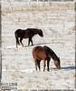 Horses,