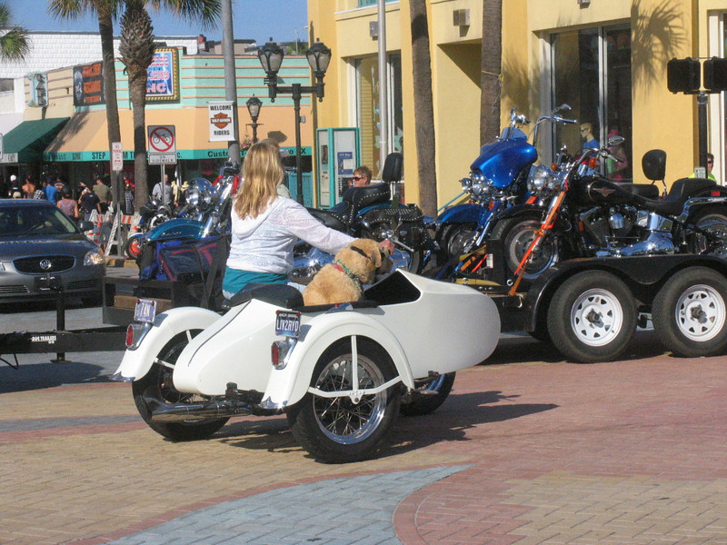 Dog in sidecar with goggles