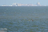 That's Galveston island across the bay.  We did not have a chance to go, but we had been before.
