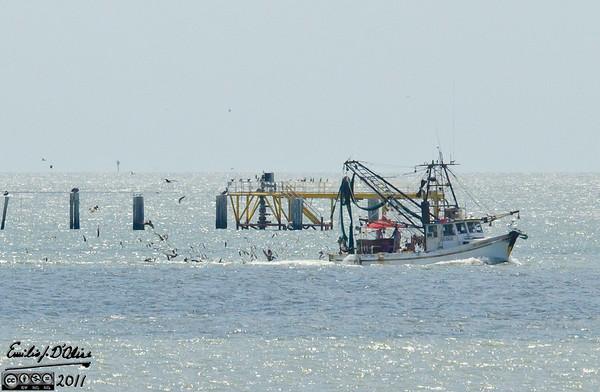 The Shrimping Boats Return