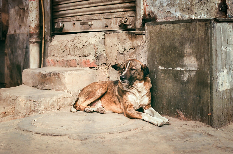 India, homeless dog