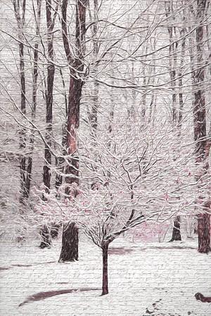 My back yard, Solon, Ohio