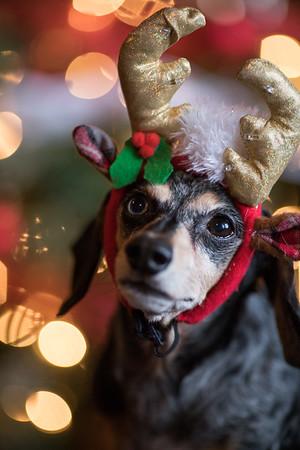 Dogs Christmas 2017