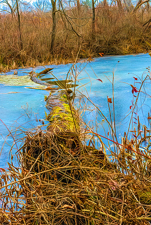 Beaver Marsh, Cuyahoga Valley National Park