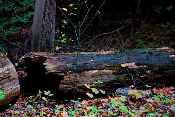 South Chagrin Reservation, Bentleyville, Ohio