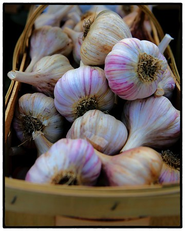 The Garlic Festival, Cleveland, Ohio
