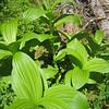08 - plant