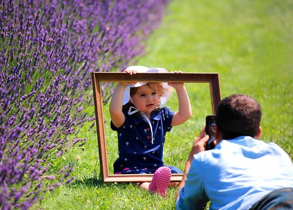 Luvin Lavender Farms, Madison, Ohio