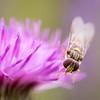 Denlethen Bugs